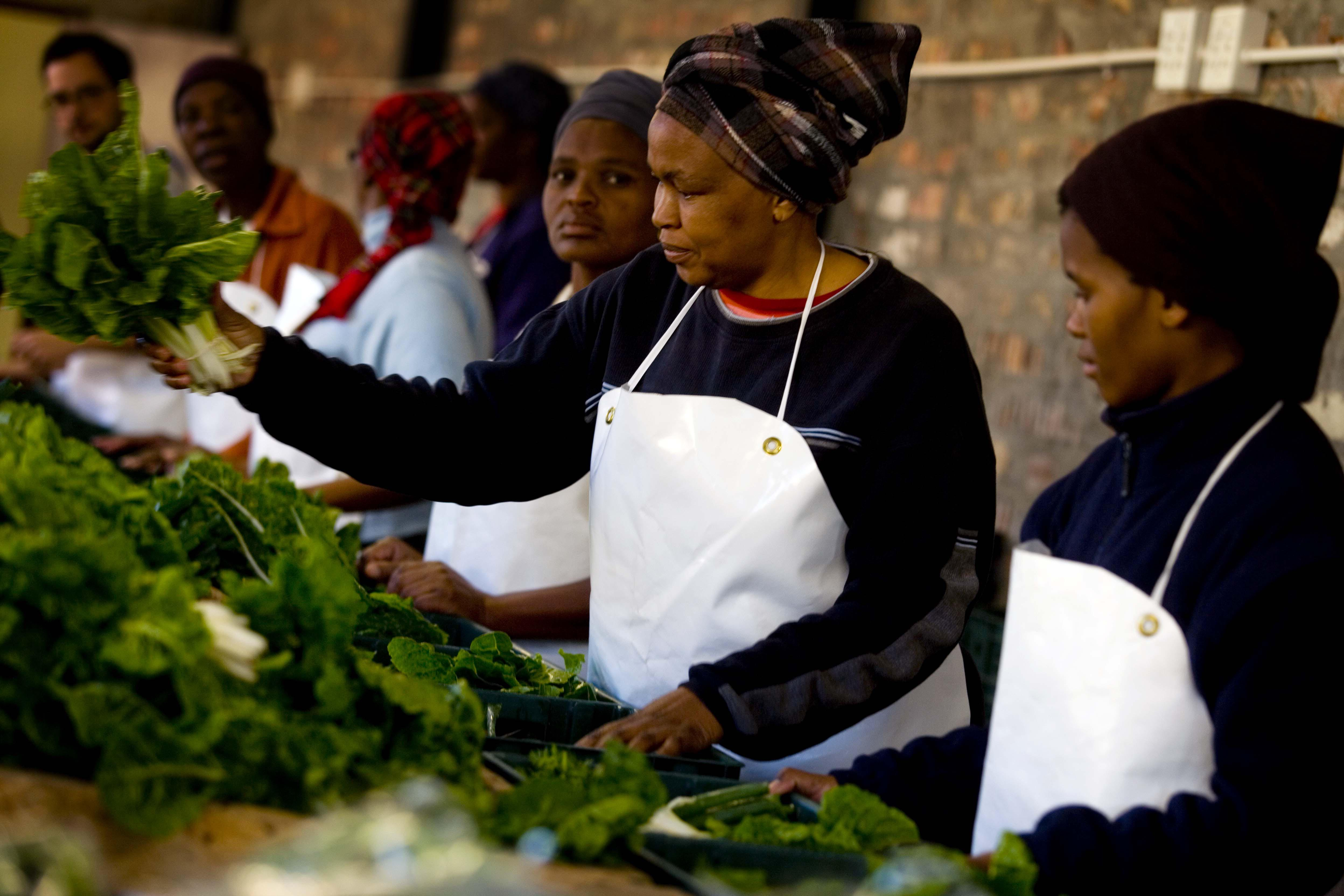 Women pack boxes of fresh vegetables in Guguletu, Cape Town, South Africa.