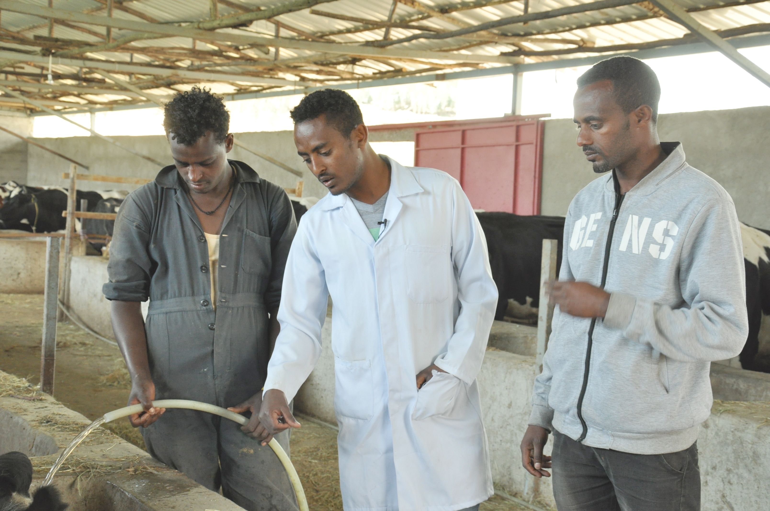 Tilahun Mulatu, a Dairy Advisor gives dairy management tips to farm works at the Zamg Business PLC in Chacha, Ethiopia