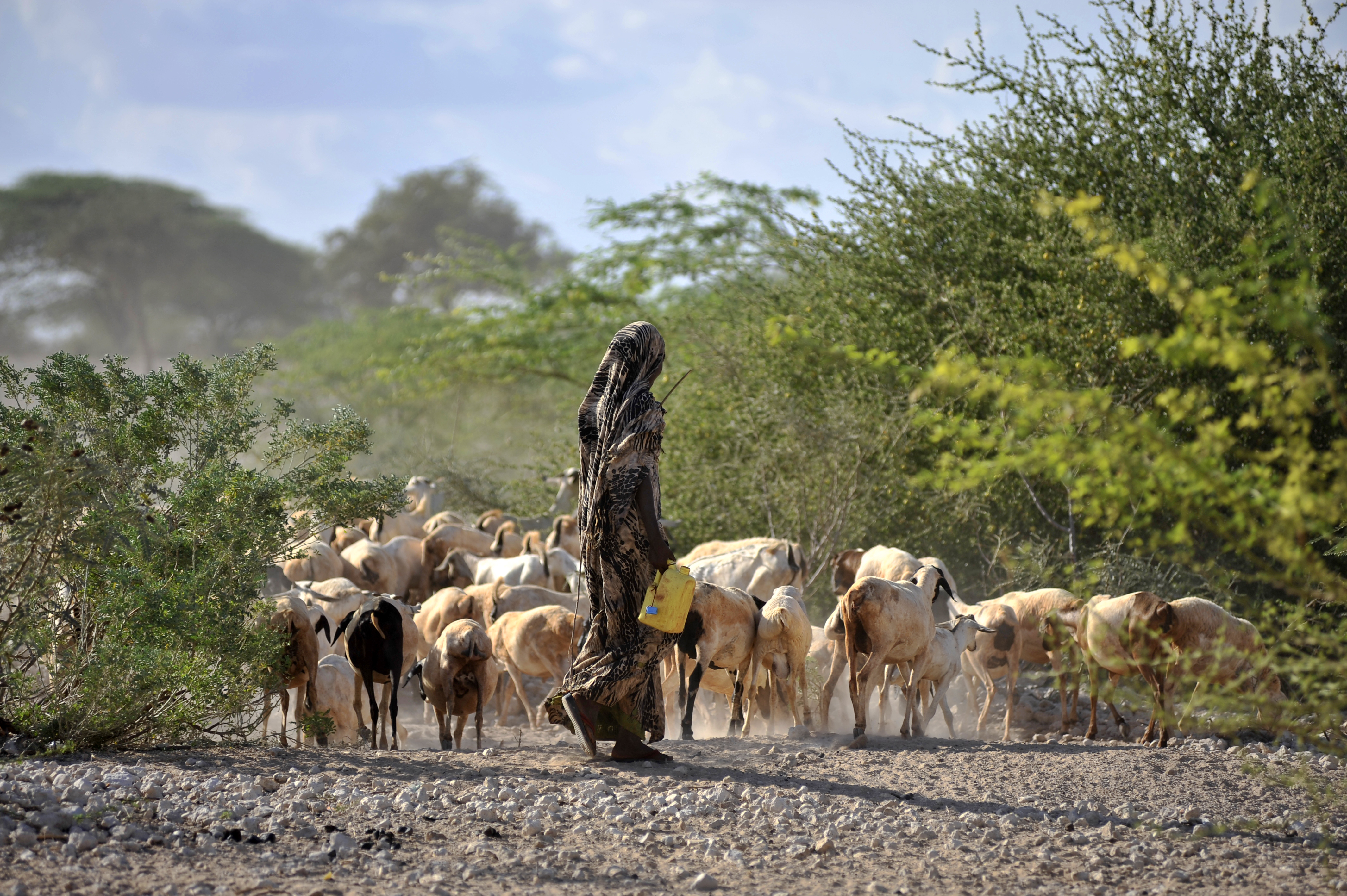 For pastoralist communities to flourish, they need to establish businesses which continue to trade during hard times