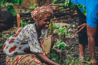 In eastern Zambia, smallholder Nelly Zimba picks grass to use for mulching to improve her soil fertility