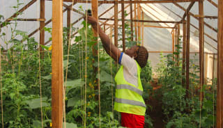 To protect crops and fish from pests and adverse weather, Save Our Agriculture has five greenhouses for its aquaponic systems and crop farming in Douala