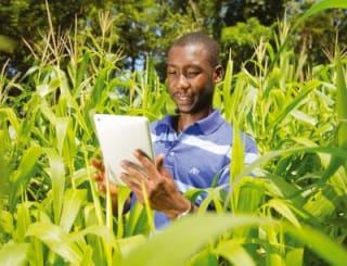 crop water productivity model