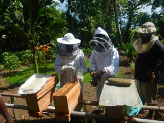 The Solomon Islands are providing smallholder producers with new market opportunities through honey production