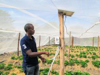 Au Kenya, des serres construites localement permettent de préserver les plants et d'augmenter les revenus des producteurs.