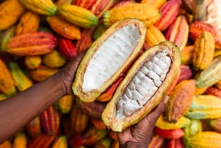 According to the Fairtrade Foundation, a typical cocoa farmer in West Africa lives on around just €0.85 a day