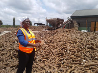 Inclusive cassava business grows from strength to strength