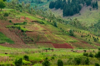 Through a Sustainable Coffee Landscapes Project in Burundi, agroforestry practices have been adopted across 4,400 ha of land