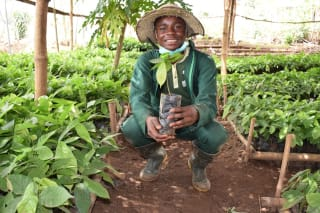 Springboard (Nigeria) trains young farmers in organic farming, production and processing of crops specifically plantain and maize