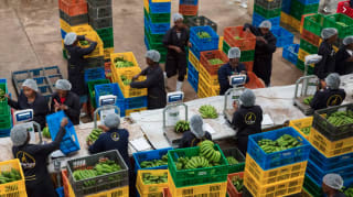 Twiga Foods connects farmers to markets