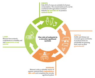 By 2050, the global population will have risen to 9.5 billion people. In a circular food system, we can use the current available agricultural land to provide food without causing any extra burden to the earth.