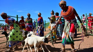 Traditional Samburu tribeswomen gather their goats to sell at Merille livestock market, some 411km north of Nairobi in Kenya's Marsabit county