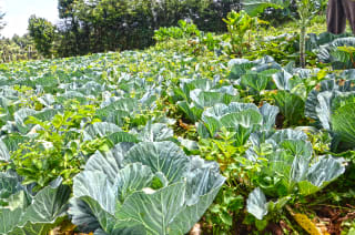 Crowdfunding links investors with farmers and provides alternative financing to producers