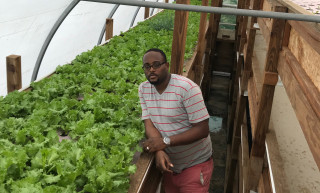 Using aquaponics, Green Haven Fresh Farm produces 1.8 t of lettuce every month