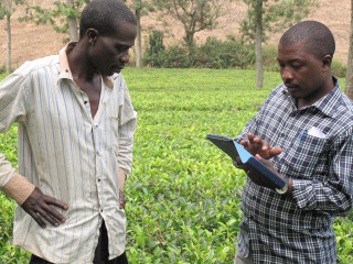 gara Growers Tea Factory Ltd in Uganda has implemented a geo-referencing and farm mapping initiative to profile its farmer members