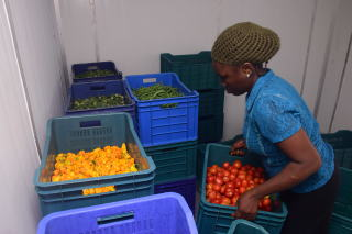 ColdHubs solar-powered cold storage rooms can hold 2 t of perishable farm produce