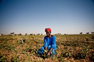 The agricultural sector often provides up to two-thirds of employment in fragile states