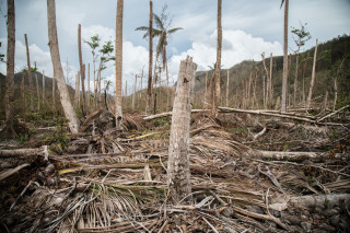 Hurricane Maria caused widespread devastation to Dominica's agriculture sector