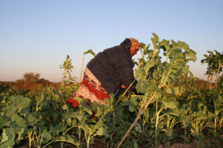Urban farmer, Elizabeth Tshuma in her horticulture plot, at Hyde Park outside Bulawayo, Zimbabwe. Many say women entrepreneurs face more challenges in getting their foot in the door in agricultural business than men