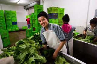 Acceso's collection centres in El Salvador directly source more than 60 types of fruits, vegetables and seafood from over 1,000 smallholders