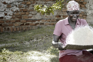 In northern Uganda, a social enterprise has trained over 11,000 poor rural women in rice production to help them earn a living