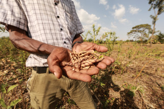Conservation agriculture-based practices are helping smallholder farmers in Africa improve the health of their soil and increase their yields