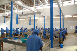 Tolaro Global's processing facility buys cashews from 7,000 farmers