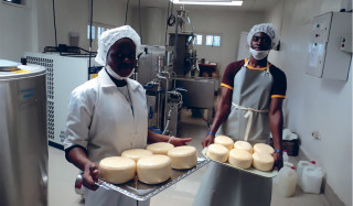 Workers processing milk into cheese and yoghurts at Tadu Dairy