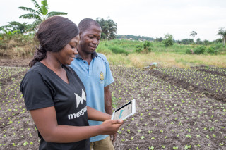 The gathering of farmer- and field-based data is enabling providers to deliver tailored and timely services to smallholders