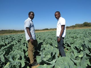 Young farmers and brothers Prosper and Prince Chikwara are using precision farming techniques at their horticulture farm, outside Bulawayo, Zimbabwe