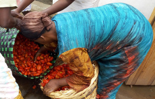 By producing tomato puree, Tim Agro is reducing post-harvest losses and providing a new market for farmers