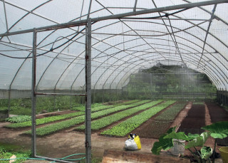 Energy efficient products used in Goodfellow Farm greenhouses include an aluminet shade curtain to heat and create shade for the crops