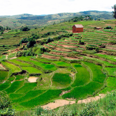 Terraced farms are improving crop production for hundreds of thousands of rural smallholder farmers in Rwanda