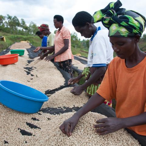 Support for policy and strategic development, Rwanda