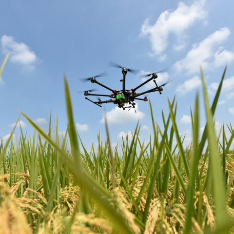 The use of drones for monitoring rice crops at CIAT's headquarters in Colombia