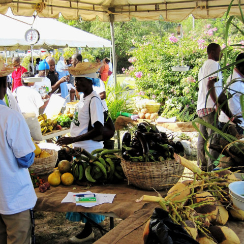 A 'safety net' programme in Haiti is enabling the poorest households to purchase healthy foods such as fruits and vegetables
