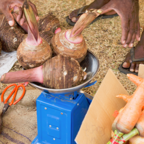 New Opportunities in the Agritourism Sector in the Pacific