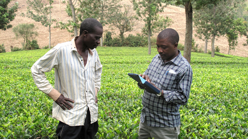 Profiling tea farmers in Uganda