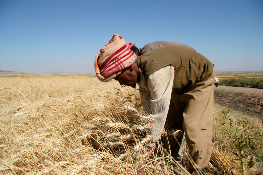 Agriculture – a keystone for sustainable development