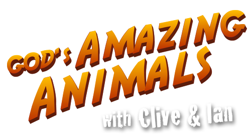 God's Amazing Animals with Clive and Ian