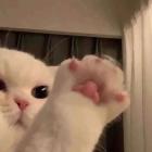 Tammy Ng