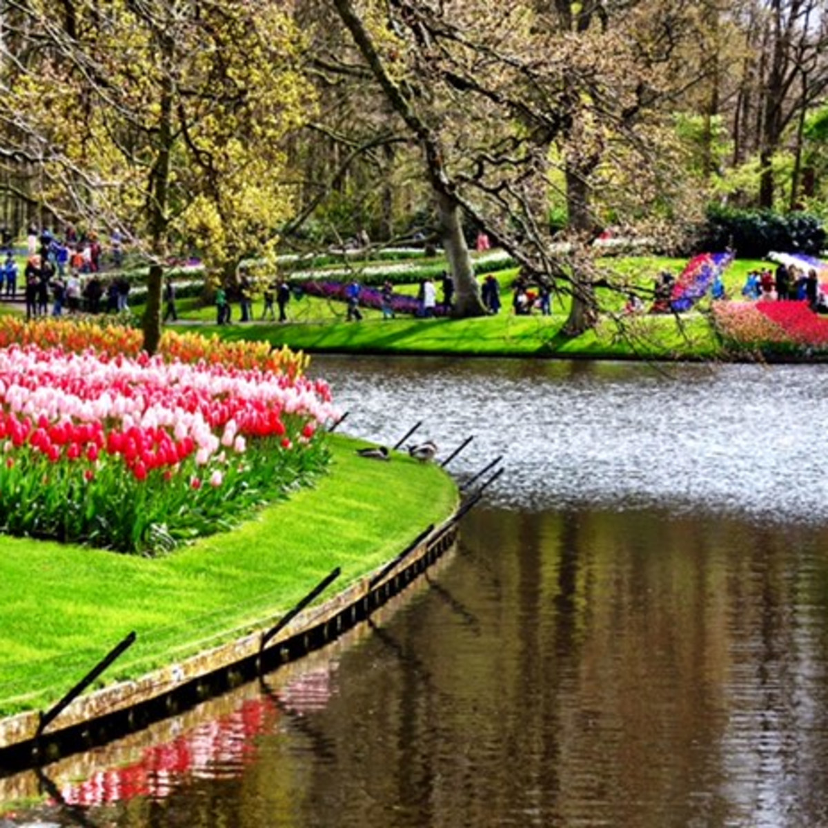 Tulip Amsterdam Keukenhof: 50 Hours In Amsterdam: Why Tiptoe Through Tulips When You