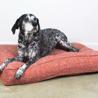 BG Dog Beds