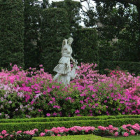River Oaks Garden Club presents 82nd Annual Azalea Trail