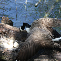 Heard Natural Science Museum & Wildlife Sanctuary presents Second Saturday Bird Walk