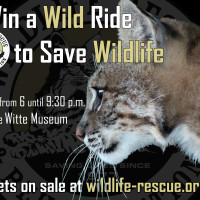 Wildlife Rescue and Rehabilitation presents Win a Wild Ride to Save Wildlife