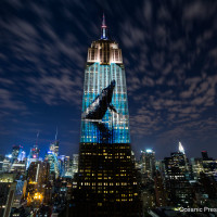 Houston Green Film Series presents Dinner & Film Screening: Racing Extinction