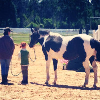 SIRE's First Annual Horse Show