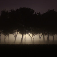 line of trees in a fog