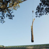 "MFAH Lecture: ""Struck by Lightning: Giuseppe Penone and the Forces of Nature"""