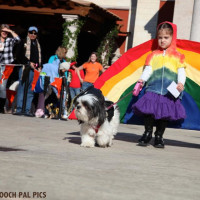 Fifth Annual Howl-O-Ween Dog Walk and Expo